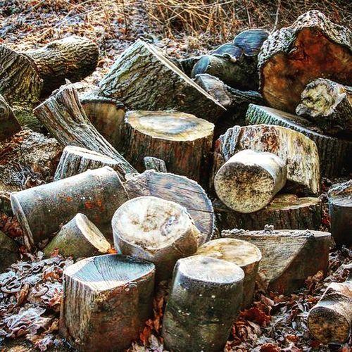 Autumn Colors Autumn Logs Outdoors Nature Wood