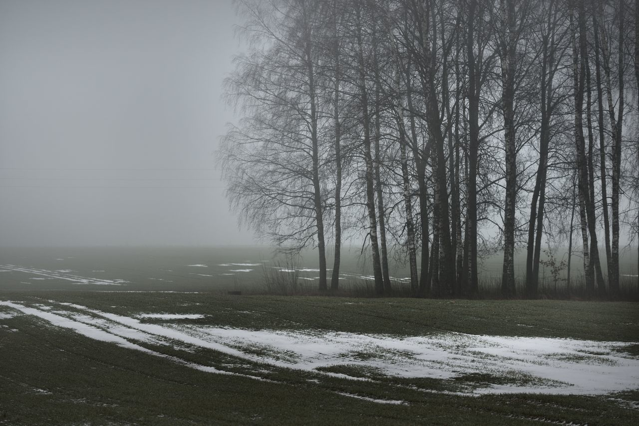 TREES ON FIELD DURING WINTER