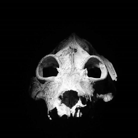 London Bw Blackandwhite Dinosaur Skellet  Nature Nationalhistorymuseum Igerslondon City Weekend Thisislondon HEAD