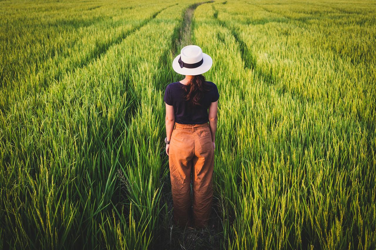 REAR VIEW OF SENIOR MAN STANDING IN FARM