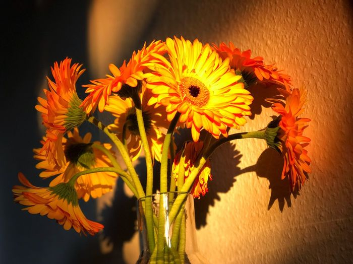 Close-up of yellow flowers blooming indoors
