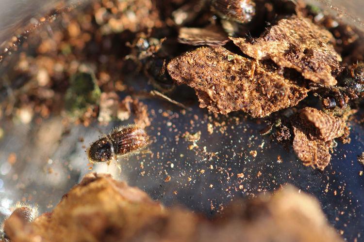 High angle view bark beetle on land