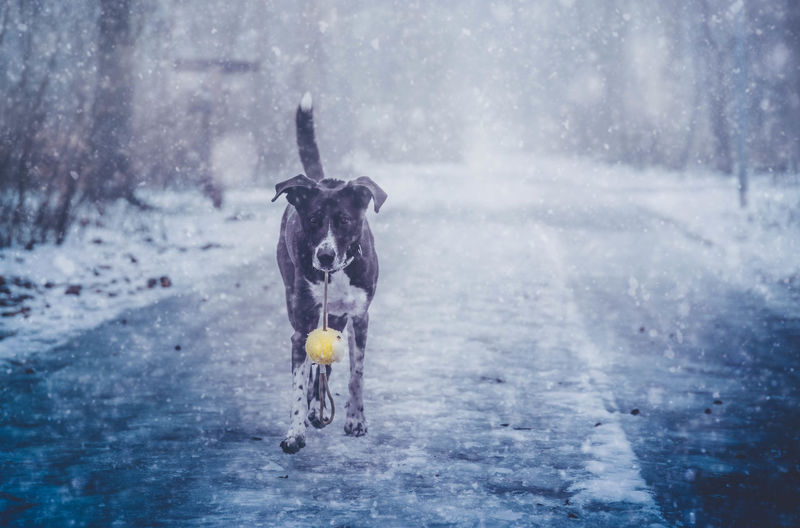 Tari in the snow Animal Themes Cold Temperature Creative Photography Dog Dogs Of EyeEm Dogslife Dogsofinstagram Dogstagram Domestic Animals EyeEm Best Shots EyeEm Gallery EyeEmBestPics EyeEmNewHere Mammal Nature_collection No People One Animal Outdoors Pets Snow Snowing Winter