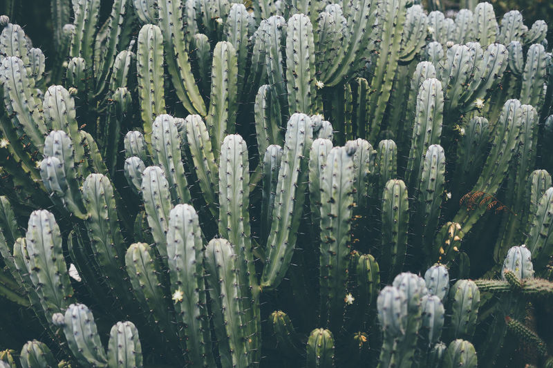 Cactus Cactus Garden Beauty In Nature Close-up Freshness Full Frame Growth Nature Plant