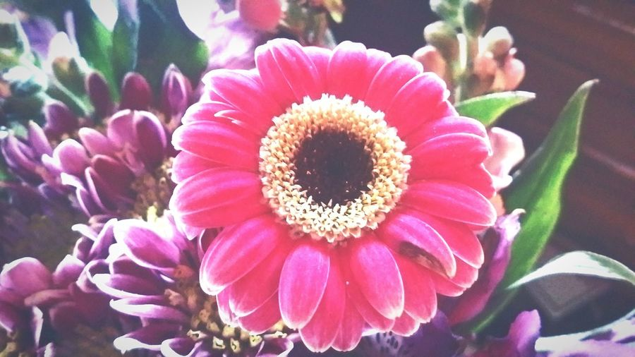 """""""Passionate Botanical"""" Colorful Salem, Oregon Playful Eye Photography Petals Blooming Flower Tranquility Harmony With Nature Love Beauty In Nature Flower Growth Flower Head Petal Nature Beauty In Nature Plant Freshness Fragility Outdoors Blooming Close-up No People Day"""
