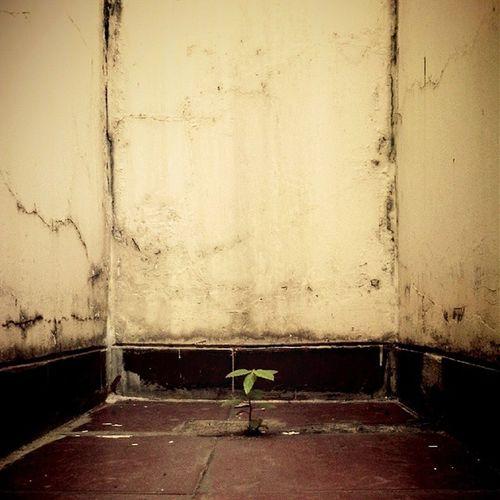 Alone Life Nature Photooftheday Photophone  Lzybstrd Ruangtenang Fatamorphosis Pocketphotography