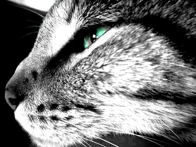 Domestic Cat Pets Feline Domestic Animals Animal Themes One Animal Whisker Mammal No People Portrait Close-up Indoors  Day Beauty In Nature