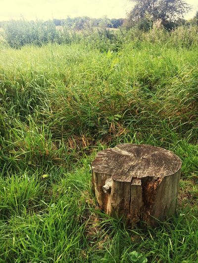 Grass Tree_stump No People Field Nature