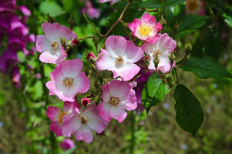Beauty In Nature Pink Color Flower 😚 Flower Head Freshness Growth Outdoors Daytime No People