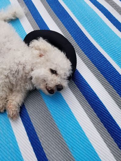 laying in hat.