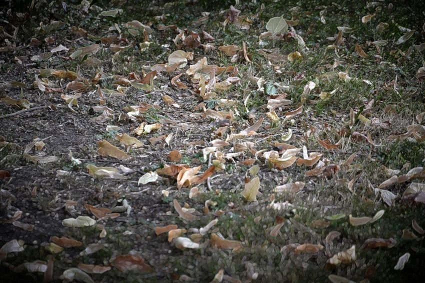 Abundance Autumn Change Day Dirty Dry Field Fragility Full Frame High Angle View Land Large Group Of Objects Leaf Leaves Messy Natural Condition Nature No People Non-urban Scene Outdoors Scenics Tranquility