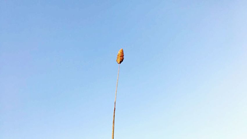 Sky Low Angle View Clear Sky Blue Nature Copy Space Day No People Rope Outdoors Wind Flying Mid-air Environment Hanging Sunlight Kite - Toy Sunny Beauty In Nature Flag