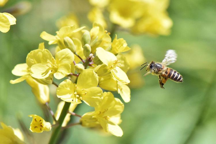 Honey Bee Bee