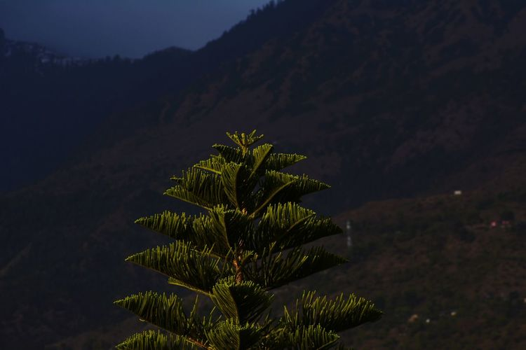 High angle view of tree against mountain