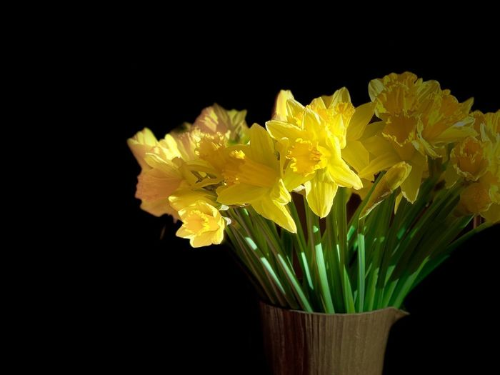 Close-up of yellow flower vase against black background