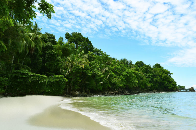 Trees at beach against sky
