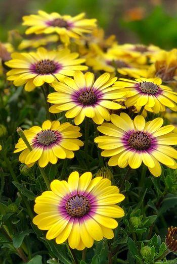 Flower Flowering Plant Fragility Petal Vulnerability  Freshness Flower Head