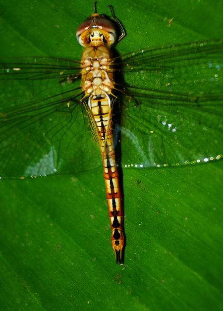 Dragonfly Insect Photography Insect Eyeem Photography Night Photography