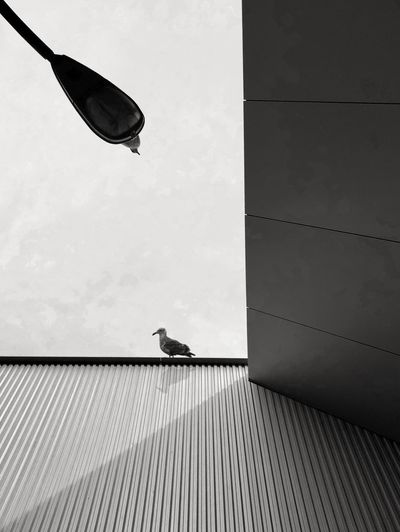 Low angle view of bird perching on wall against sky