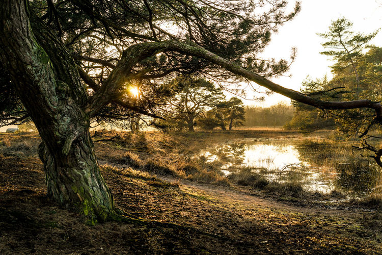 Beauty In Nature Branch Day Forest Grass Lake Landscape Leersumse Plassen Leersumse Veld Nature No People Outdoors Scenics Sky Tranquil Scene Tranquility Tree Tree Trunk Water