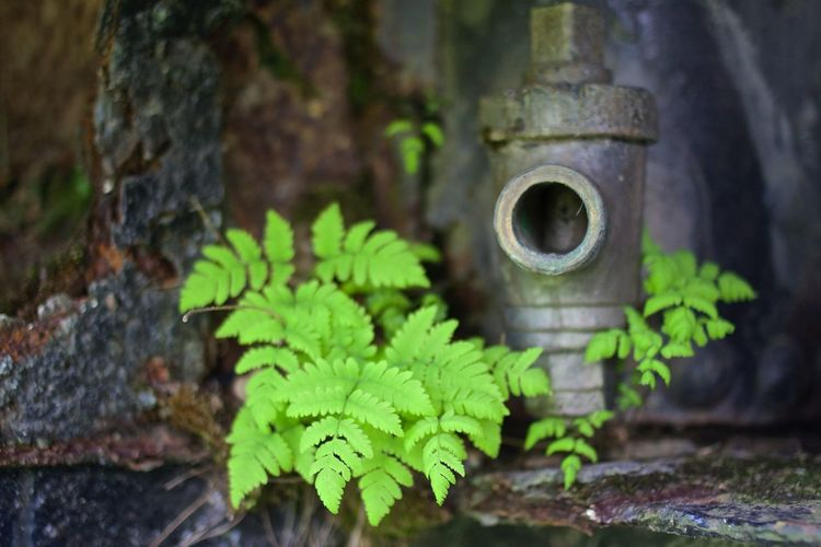 Plants Green South Corrosion Nature Nature On Your Doorstep Canon EOS 700D EF 35mm f2