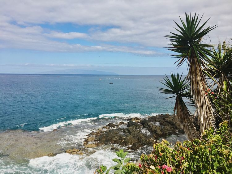 View to La Gomera Tenerife Sea Nature Scenics Sky Beauty In Nature Horizon Over Water Water Tranquil Scene No People Palm Tree Outdoors Day Tree Tranquility La Gomera Travel Canary Islands Vacations