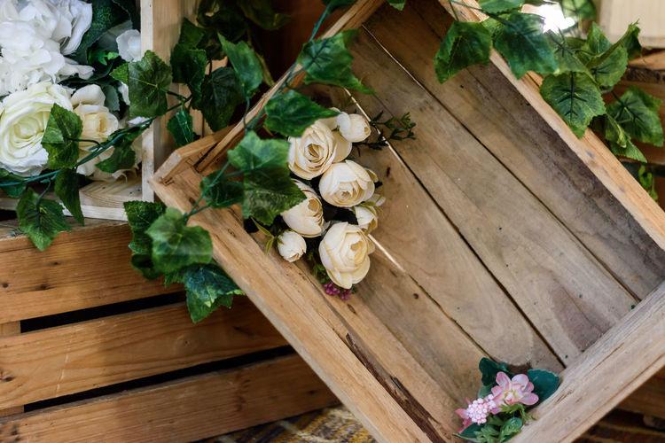 rose flowers in