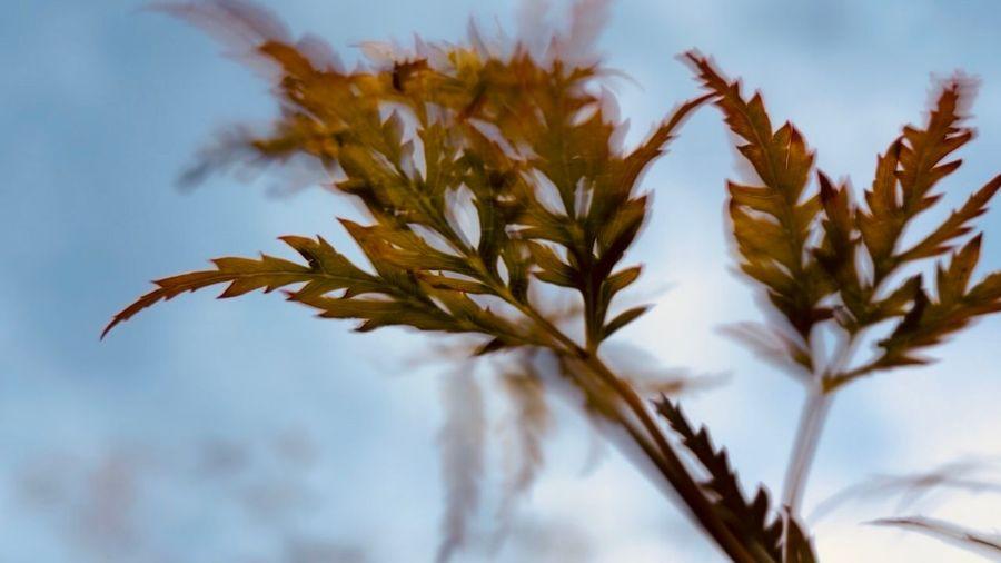 Blur Plant