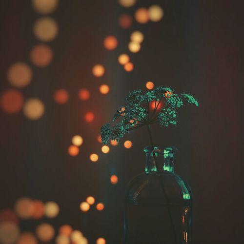 Close-up of flower vase against illuminated christmas lights