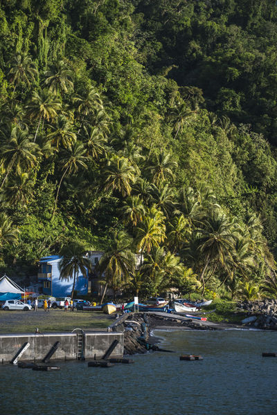 Grand Riviere Grand'Rivière Harbor Martinique Palm Tree Caribbean Green Color Island Land Palm Tree Port Scenics Scenics - Nature Sea Simplicity Small Town Transportation Tropical Tropical Climate Water Waterfront