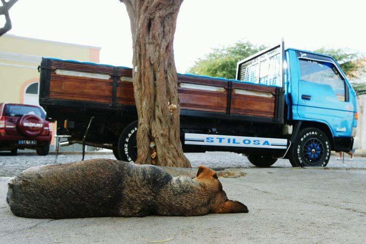 "Capo Verde is ""stilosa"" :) Streetphotography Enjoying Life RePicture Travel Eye4photography  Taking Photos"