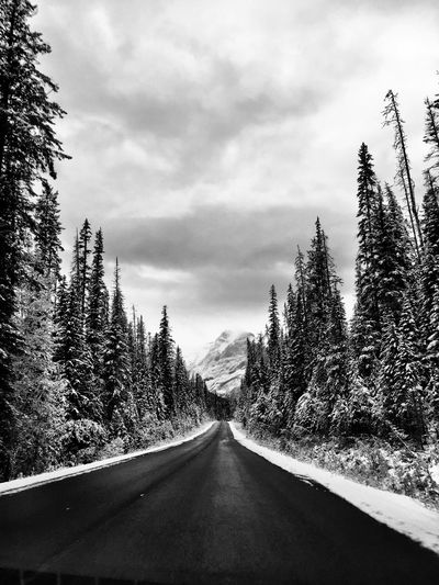 Blackandwhite Canada IPhoneography Canadian Rockies  Tree Plant Road Direction Sky The Way Forward Transportation Cloud - Sky Diminishing Perspective Nature No People vanishing point Beauty In Nature Tranquility Growth Day Tranquil Scene Outdoors Land Coniferous Tree