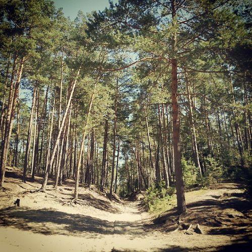 Roztocze Susiec Polska Poland nature pink tree clouds cloud blue green insta igers instagram photo shot like l4l