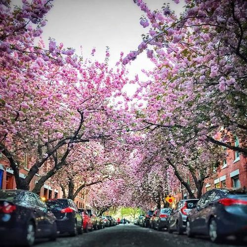 """""""The best part of beauty is that which no picture can express.""""~~Francis Bacon EyeEm Best Shots ATouristInMyOwnCity ScenesFromTheStreet TheSidewalksOfTheCity ABeautifulMorning LaDolceVita Cherry Blossoms"""