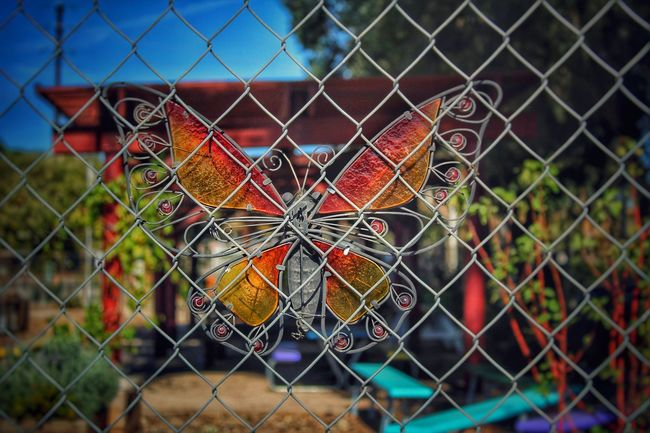 Man made Butterfly Butterfly Garden Chainlink Fence No People Multi Colored Outdoors Close-up Nature On Your Doorstep Fence In My Way  On The Other Side Metal Art Object Photography Layers Layers And Colors Shapes Colorfull