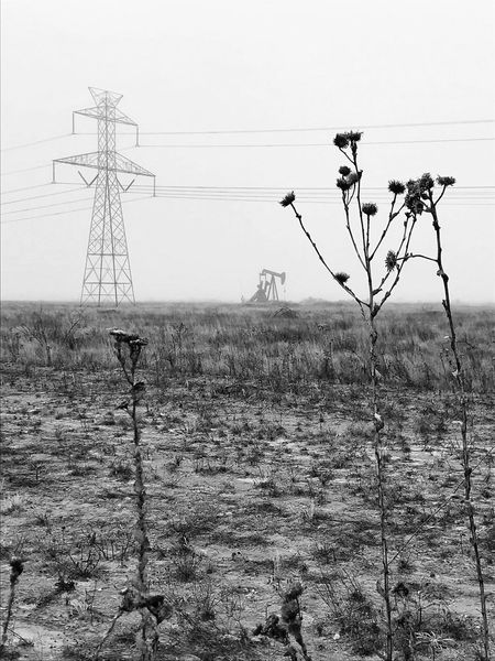 Power line and pump jack in a cotton field Monochrome Texas Landscape Rural Scene Foggy Morning Petroleum Industry Pump Jack Cable Electricity Pylon Electricity  Power Supply Power Line  Fuel And Power Generation Day Connection Outdoors No People Technology Telephone Line Nature