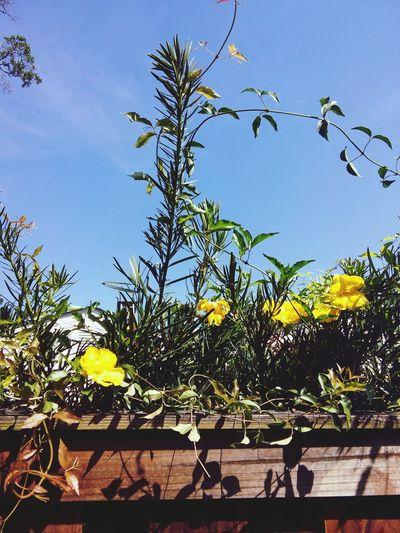 Spring Flowers Sun Beatiful Day..