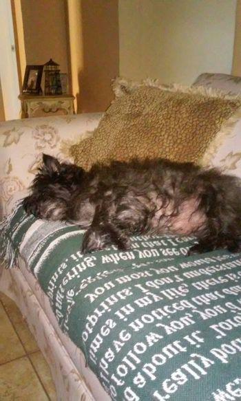 Buddy Dog Sleeping Cute Pets