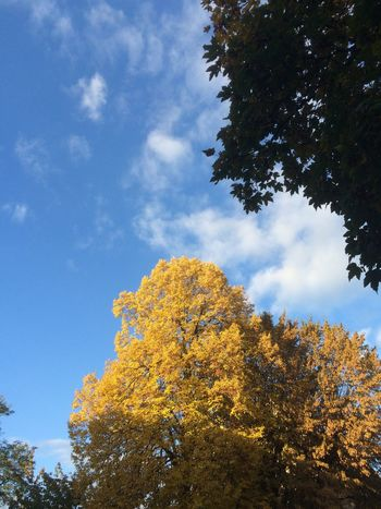 Tree Nature Low Angle View Sky Autumn Beauty In Nature Outdoors Cloud - Sky Treetop Day