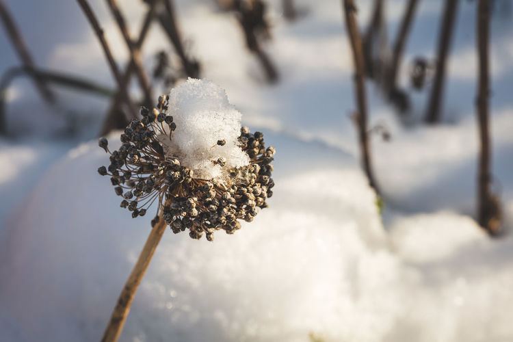 Close-up of snow on plant