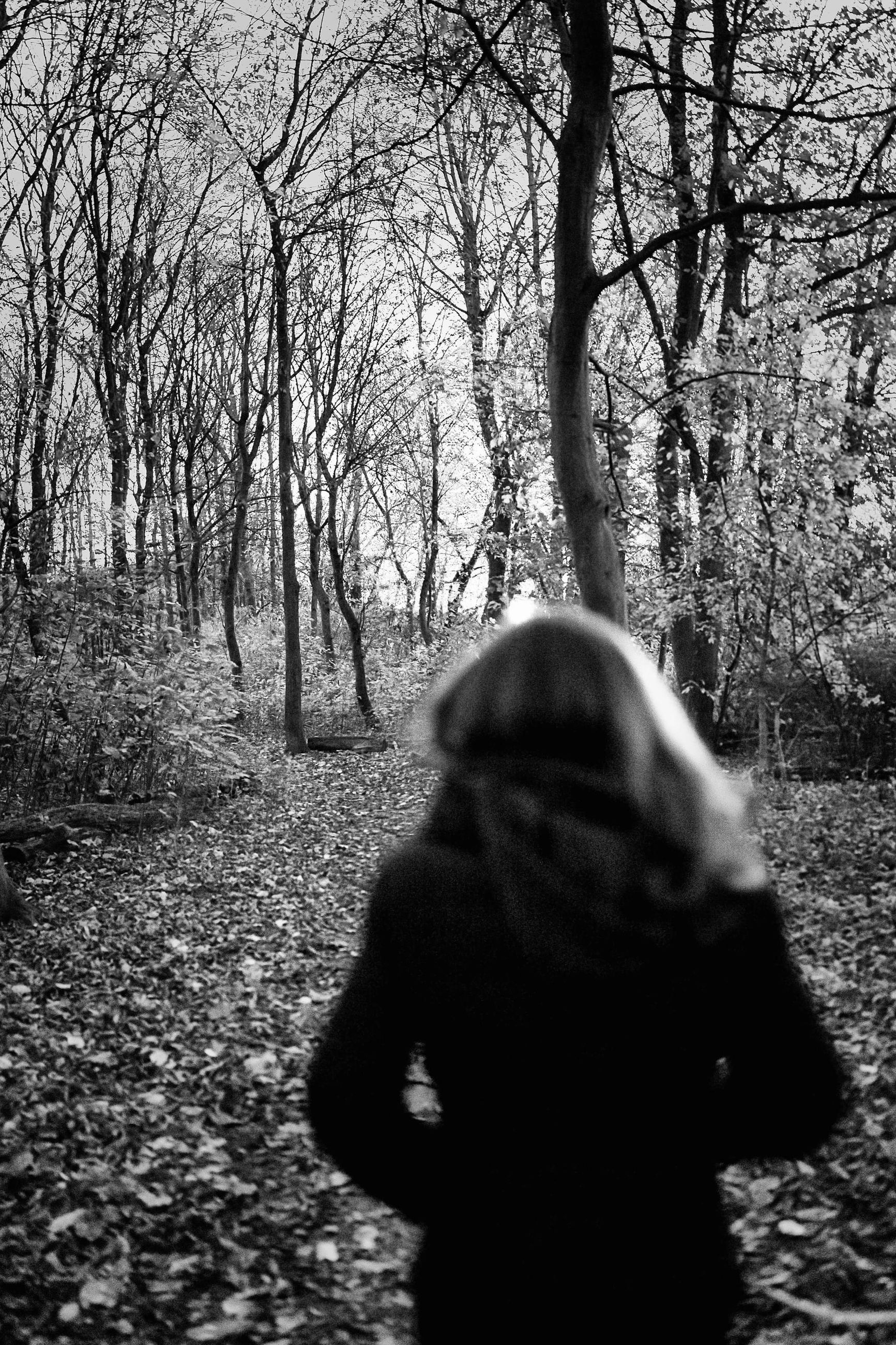 tree, one person, plant, nature, black and white, black, rear view, land, lifestyles, leisure activity, monochrome, day, darkness, monochrome photography, bare tree, women, sunlight, leaf, winter, adult, standing, forest, outdoors, branch, tranquility, tree trunk, morning, trunk, three quarter length, waist up, autumn, casual clothing