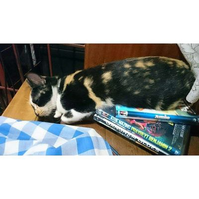 My Loki will do anything just to sleep. Lazyfurr FelineDomesticus AmericanBobtailCrossBreed Perrysons Calico