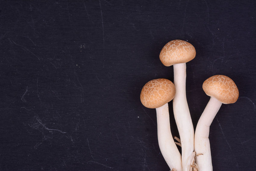 Shimeji mushrooms on black background. Black Background Mushrooms Rain Raw Shimeji Close-up Food Freshness Indoors  No People Studio Shot Vitamin