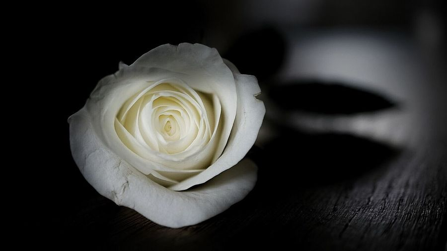 Sometimes you need to run away just to see who will come after you..✨💫✨ See The World Through My Eyes A Time To Free The Mind 💚 The More Loving One Be Your Own Hero Hello World Roses White Beauty In Nature