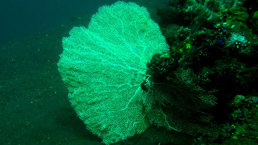Beauty In Nature Blue Close-up Coral Elevated View Green Green Color Ground Growth INDONESIA Natural Pattern Nature No People Outdoors Tranquility Tulamben Underwater Underwater Photography