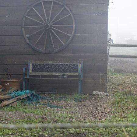 Abandoned Old Wood