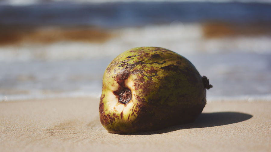 Beach Close-up Day Focus On Foreground Food Food And Drink Freshness Fruit Healthy Eating Nature No People Outdoors Rotten Sand Sea Water