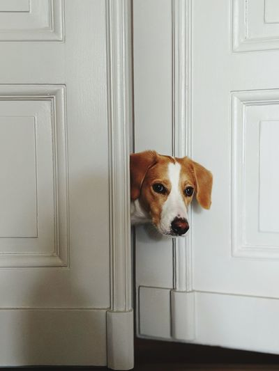 Portrait of dog standing at doorway