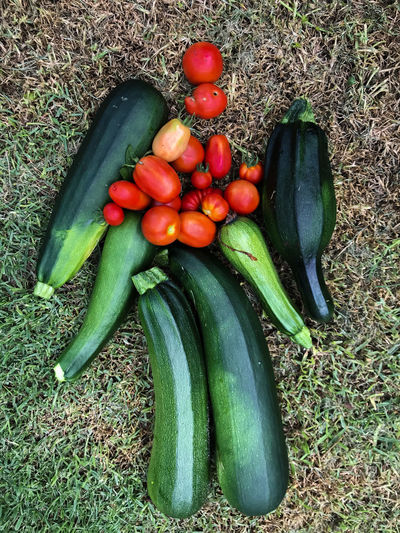 Zucchini Day Food Food And Drink Freshness Green Color Growth Healthy Eating High Angle View No People Outdoors Tomatoes Vegetable