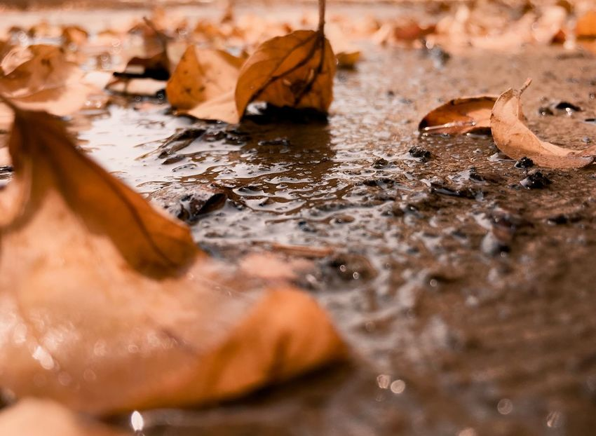 EyeEm Best Shots EyrEmNewHere Premium Collection EyeEm Selects Water Nature Day No People Land Leaf EyeEmNewHere Wet High Angle View Beauty In Nature Selective Focus Animal Themes Brown Outdoors Plant Part Animal Rock Close-up Sunlight Solid Leaves